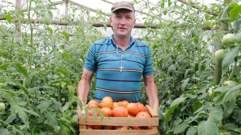 productores tomate